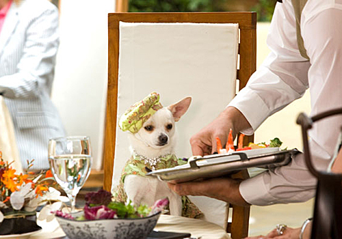 beverly_hills_chihuahua1