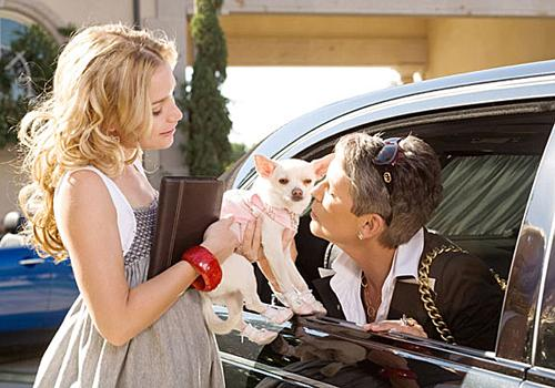 beverly_hills_chihuahua2